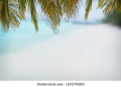 Coconut leaf and see beach
