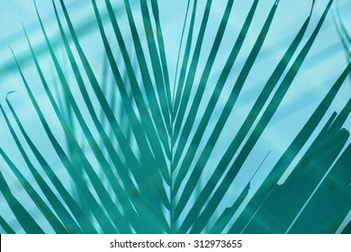 Coconut leaf shadow on clear swimming pool water surface