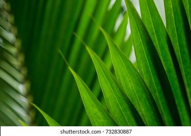coconut leaf texture