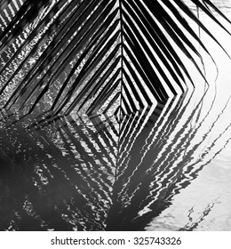 Coconut leaves abstract reflection,black and white