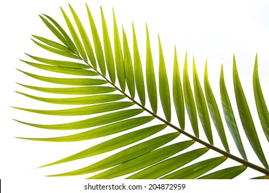 Coconut leaves can be made very many