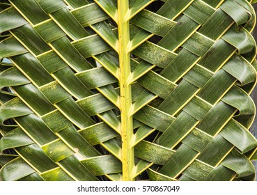 Coconut leaves is decorated in texture to be beautiful.