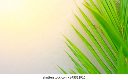 Coconut leaves with white background wallpaper.