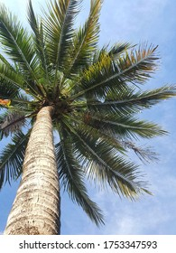 coconut lined pattern gules in summer