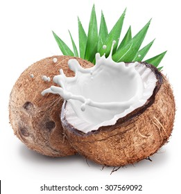 Coconut with milk splash inside and coconut leaves. File contains clipping paths.