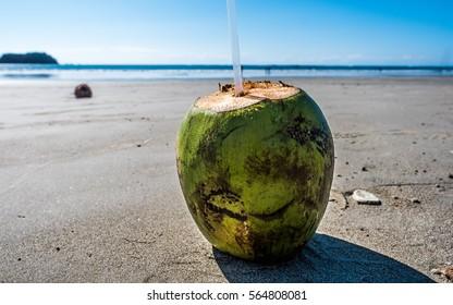 Coconut on the Beach Guanacaste Costa Rica Tourism Travel Beach  Coconut water milk beach Tico Vacation Pacific Ocean Central America Resort Vacation Fruit Coconut Samara Beach Costa Rica Pura Vida
