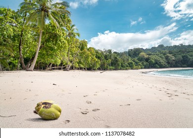 coconut on the beach of Manuel Antonio park, Costa Rica