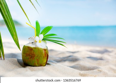 Coconut on the beach sand/ summer beach background with coconut drink