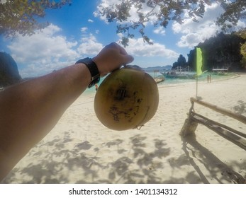 Coconut on beach in tropical paradise with blue sky and sandy beach.