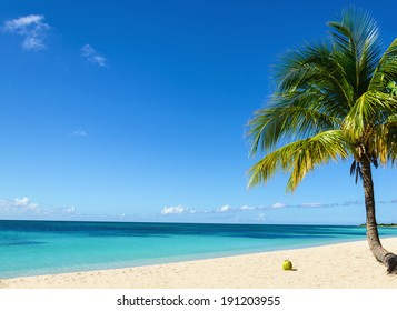 Coconut on an exotic beach with  palm tree entering the sea on the background of a sandy beach, azure water, and blue sky