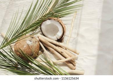 Coconut on a sandy beach with palm