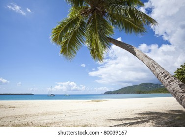 Coconut palm on a beach on St. Thomas in US Virgin Islands