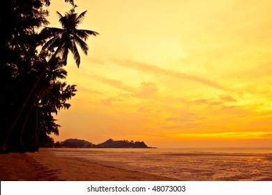 Coconut palm on sand beach in tropic on sunset. Thailand, Koh Chang, Klong Prao beach