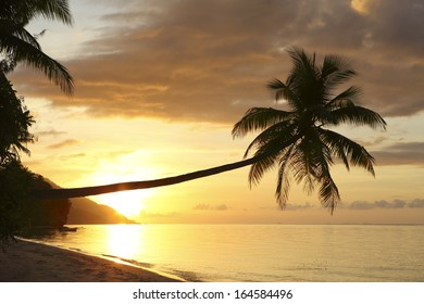 Coconut palm on tropical island beach at sunset in Raja Ampat, West Papua