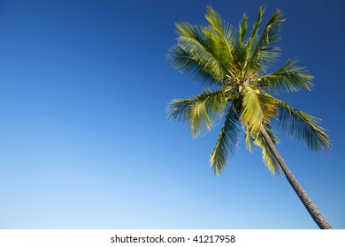 Coconut palm tree against blue sky, copy space