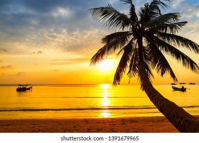 Coconut palm tree against colorful sunset. Dark silhouettes of palm tree and beautiful cloudy sky at tropical island Koh Tao in Thailand.