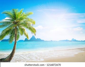 Coconut palm tree at the beach. Ao Noi, Prachuap Khiri Khan, Thailand, Asia