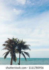coconut palm tree with beach and sunny sky background