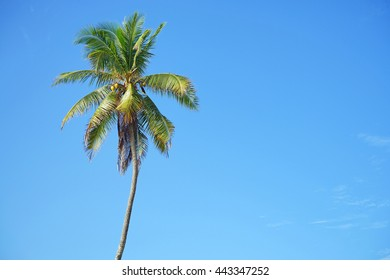 Coconut or palm tree with blue sky and copyspace area.