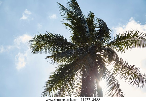 Coconut Palm tree with blue sky, Summer Sunny Sky, retro and vintage tone