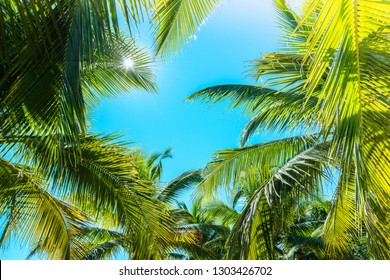 Coconut Palm tree with blue sky,beautiful tropical background.Summer vacation and travel concept.