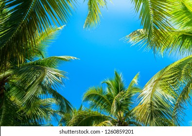 Coconut Palm tree with blue sky,tropical palm with sun rays background.