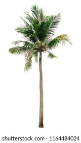 coconut palm tree isolated on white background of file with Clipping Path .