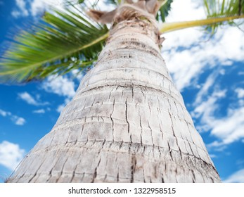 Coconut palm tree leaves, tropical nature