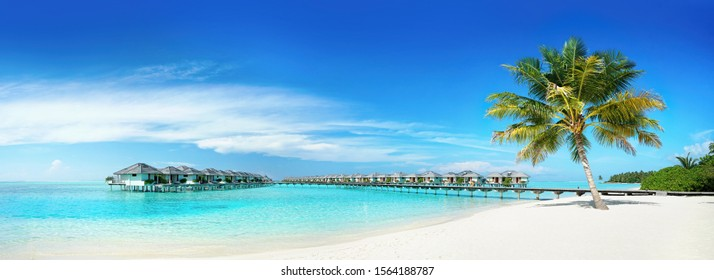 Coconut Palm tree on amazing perfect white sandy beach in island of Maldives panoramic view. Water bungalows in ocean against blue sky with clouds. Nature summer vacation background, copy space.