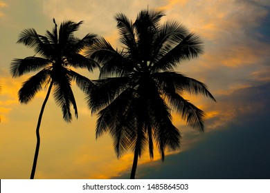 coconut palm tree on evening sunset
