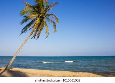 Coconut palm tree on sand beach with blue sky in sunset evening.Peaceful and relax concept.