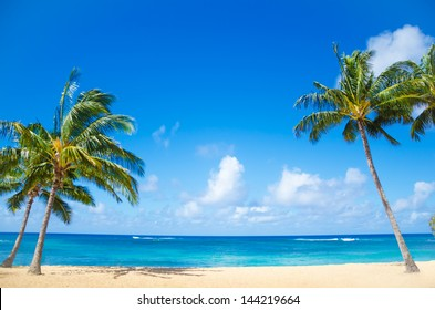 palm trees beach images stock photos vectors shutterstock