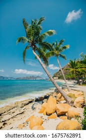 coconut palm tree on a sandy beach against the background of the sea and other palm trees