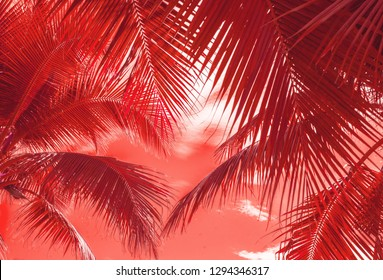 Coconut Palm tree on summer beautiful tropical background.Color of the year 2019 living coral pantone.