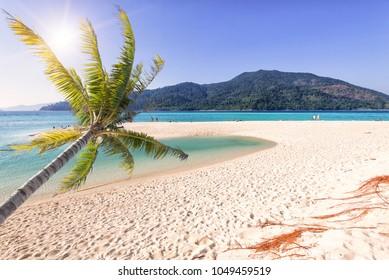 The coconut palm tree on the white sand beach,sunrise beach ,Koh Lipe,Thailand.