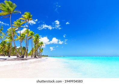 Coconut Palm tree on white sandy beach in Punta Cana, Dominican Republic. Vacation holidays summer background. View of nice tropical beach.