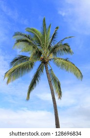 Coconut palm tree over blue sky. Hawaii island