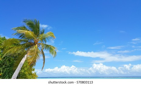 Coconut palm tree over looking the sea sky background