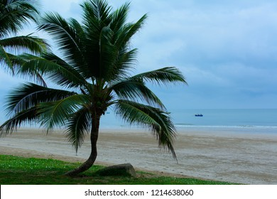 Coconut palm tree over  sea background. Can used for nature background. Copy space for text.