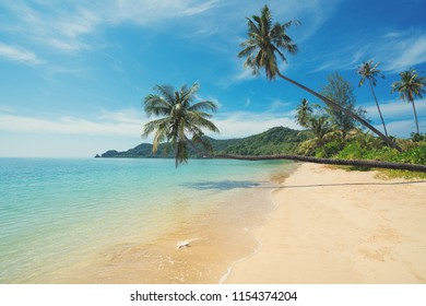 Coconut palm tree over summer beach sea in Phuket ,Thailand. Summer, Travel, Vacation and Holiday concept