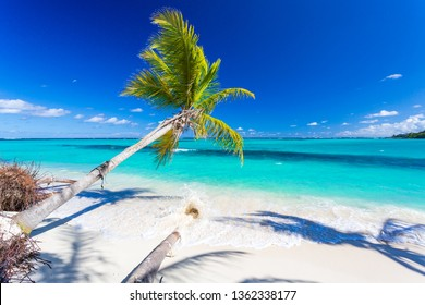 Coconut palm tree over turquoise blue sea in Caribbean island