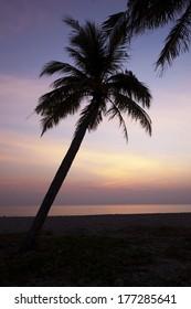coconut palm tree silhouette at Andaman seai, Thailand