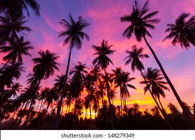 coconut palm tree silhouette at Koh Samui, Thailand