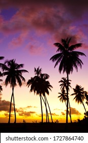 Coconut palm tree silhouettes in front of a beautiful caribbean sunset.