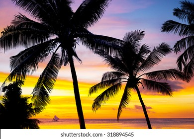 Coconut palm tree silhouettes at sunset. Tropic background.