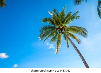 Coconut palm tree with sunlight against blue sky - Tropical summer holiday concept