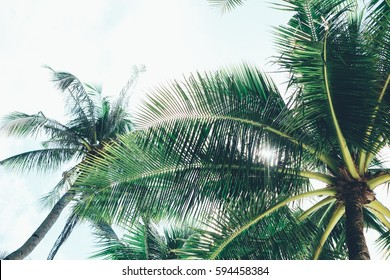 Coconut palm tree with sunlight passing through
