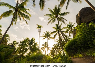 Coconut palm tree warm sun light coast rocky beach pathway, Summer vacation