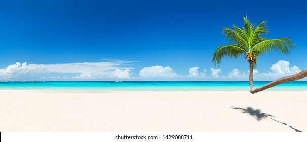 Coconut palm trees against blue sky and beautiful beach in Punta Cana, Dominican Republic. Vacation holidays background wallpaper. Panorama of nice tropical beach.
