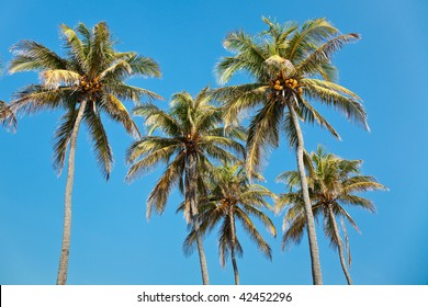 Coconut palm trees against bright blue tropical sky